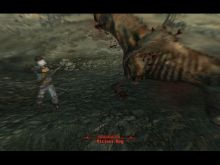 Another nice shot of one of Fallout 3's dogs getting hit by gunfire in VATS
