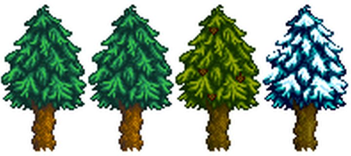A Pine tree in all four seasons - spring, summer, fall, and winter